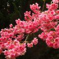 春风先到彩云南