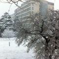 东工大の冬 雪