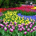 那些美丽的花儿