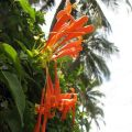 三亚植物-2