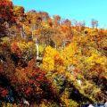 Shenandoah国家公园