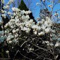 春日的北京植物园