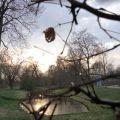 傍晚的Park Sanssouci