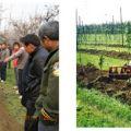 苹果密植高产栽培树型(高纺锤形)