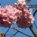 春天的花2