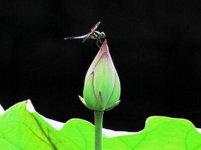蜻蜓的着陆点