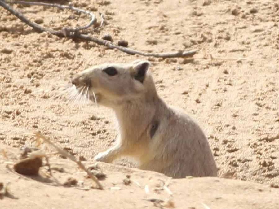 沙漠动物精彩纷呈