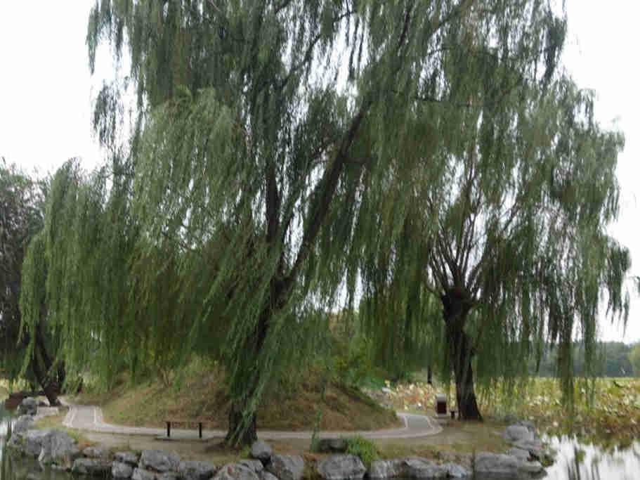 北京圆明园遗址公园之长春园