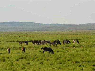 草原上的牛羊!