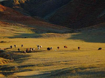 夕阳下的秋天牧场