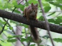 我所观察过的几种松鼠