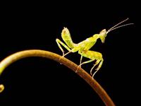 学拍小昆虫