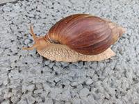 蜗牛背着重重的壳,一步一步往前爬
