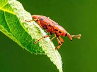 学拍小昆虫(11)