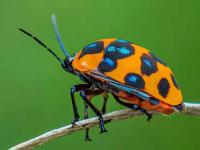 学拍小昆虫(12)
