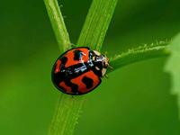 学拍小昆虫(6)