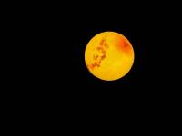 举头望明月,随手拍个球