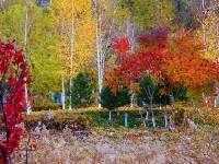 油画版的秋色