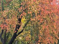《校园秋日》手机照