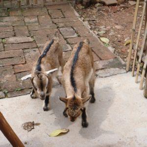 粤北行:小花小草小动物还有采松香人的小屋