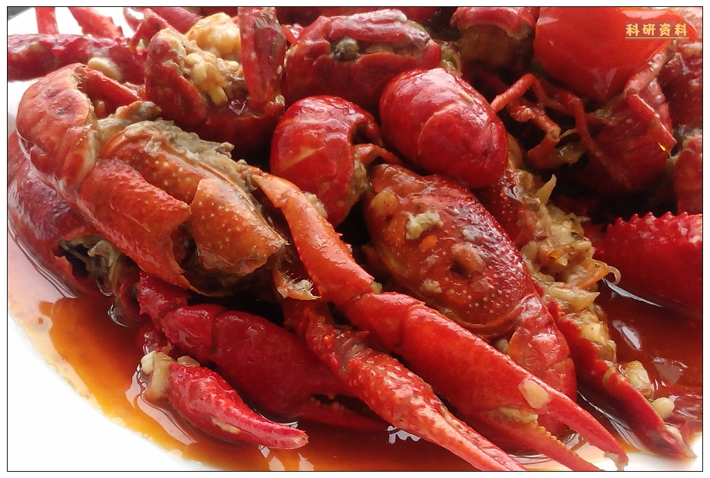 潜江小龙虾产业发展很快,目前,潜江市的小龙虾产量大约为6万吨,已经接