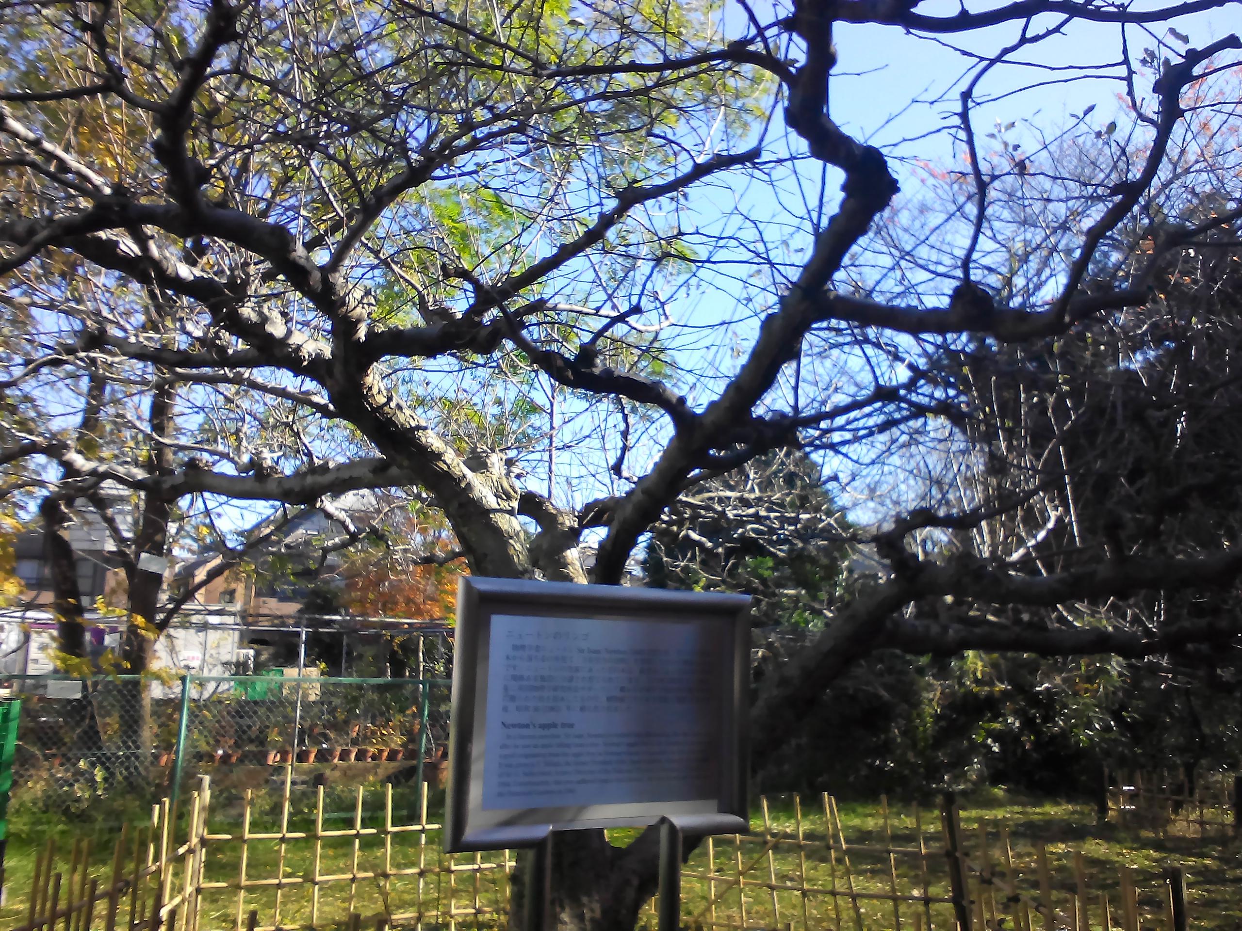 科学网 站在 牛顿苹果树 前 宁利中的博文