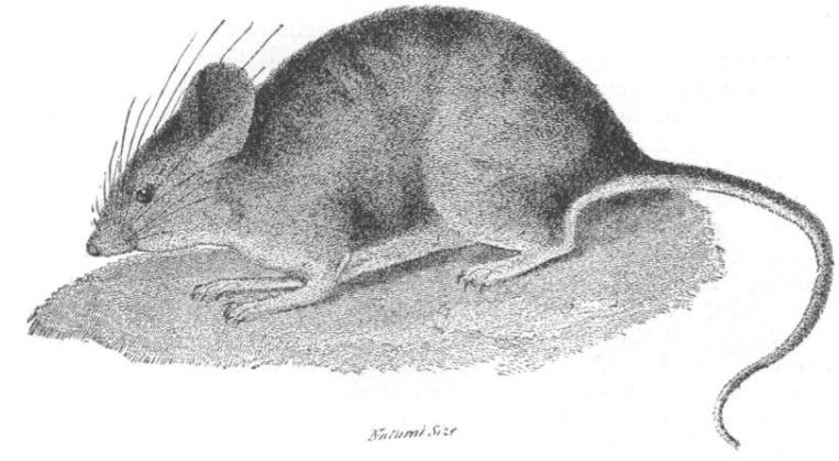 哺乳动物冬眠几例