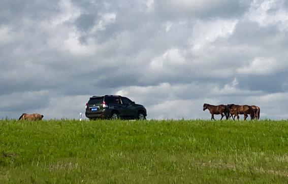 车和马.jpg
