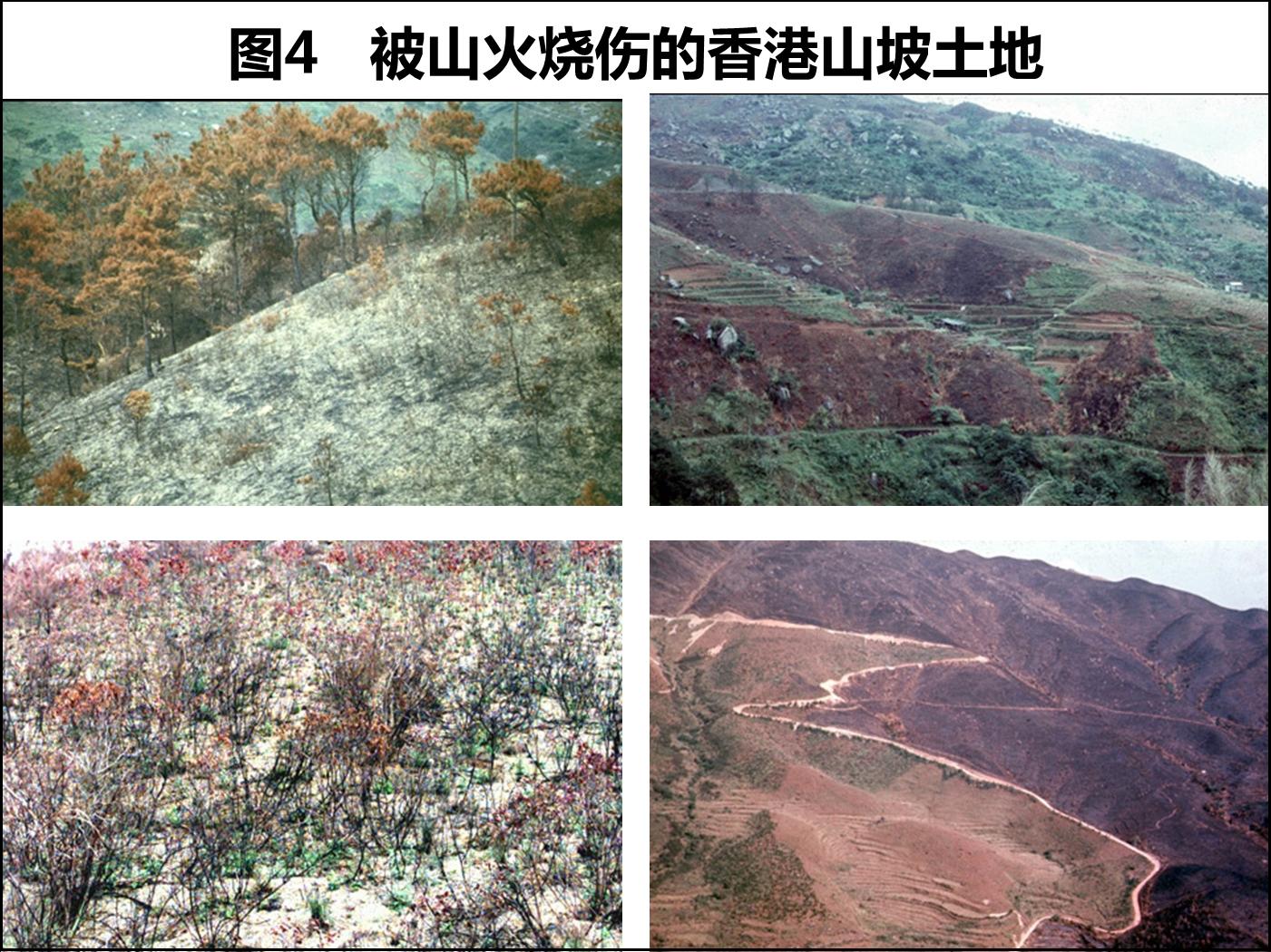 Hill-fire04.jpg