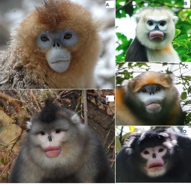 FIVE MONKEYS.jpg