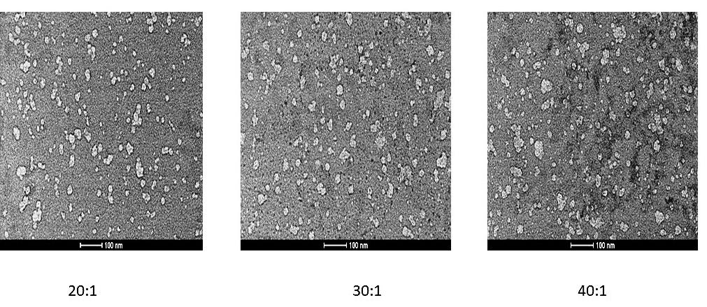鱼精蛋白-siRNA复合体的形貌.jpg