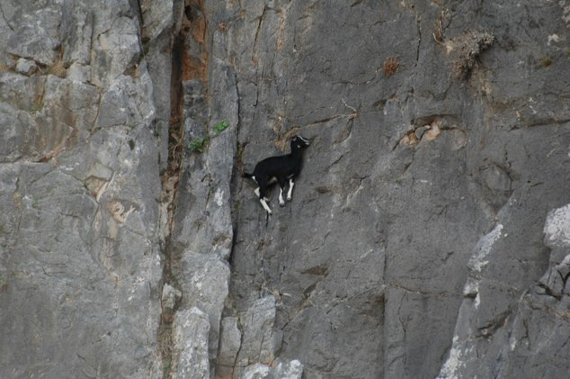 Goats-in-precarious-positions-02.jpg
