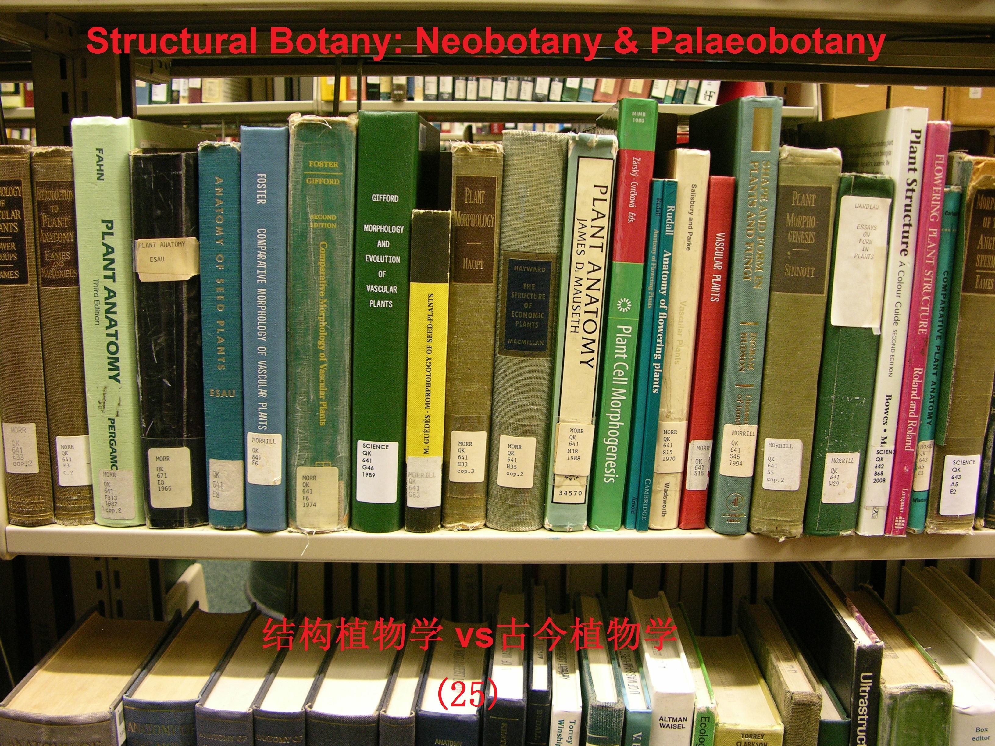 DSCN9778-structural botany logo-25.jpg