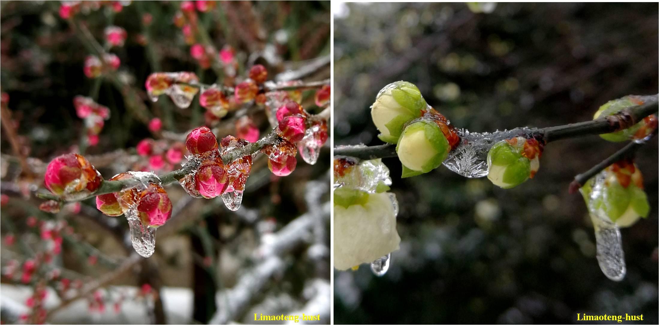 科学网寒冬里的金盏花和大吴风草!隆冬季节那
