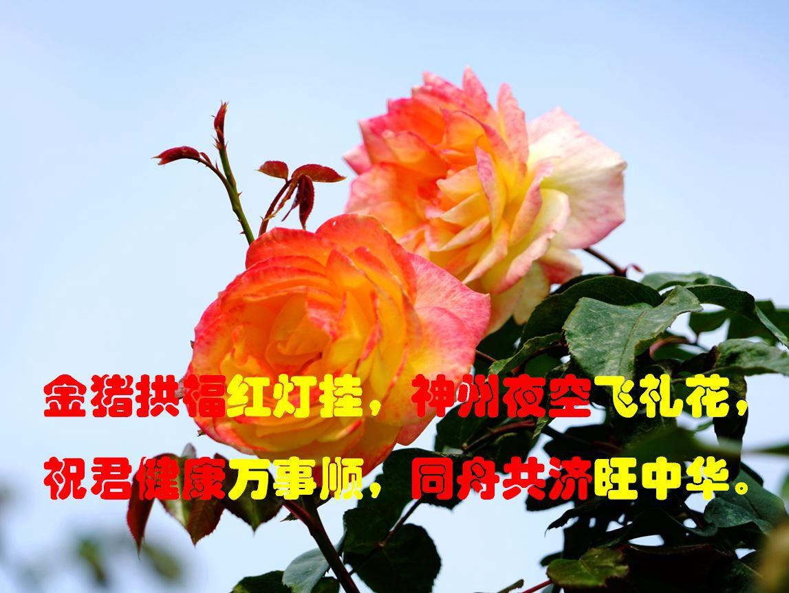 金猪拱福-1.jpg