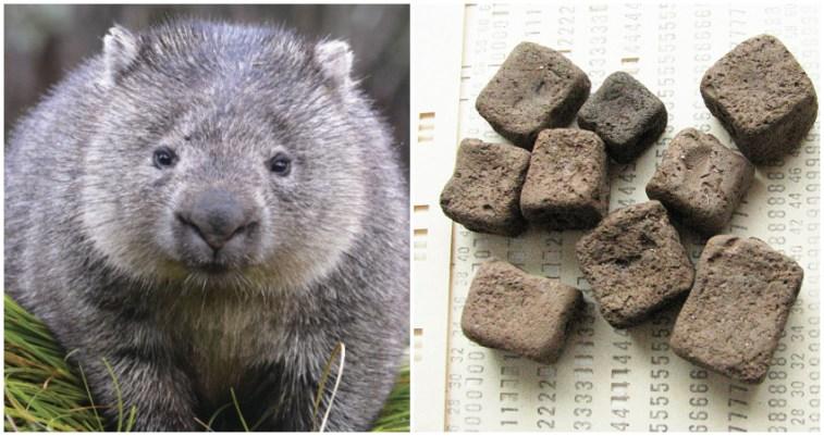 71e06ffb-wombat-poop-social.jpg