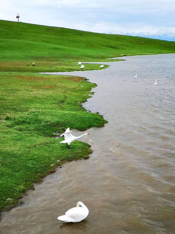 巴音布鲁克那拉提大草原2.jpg