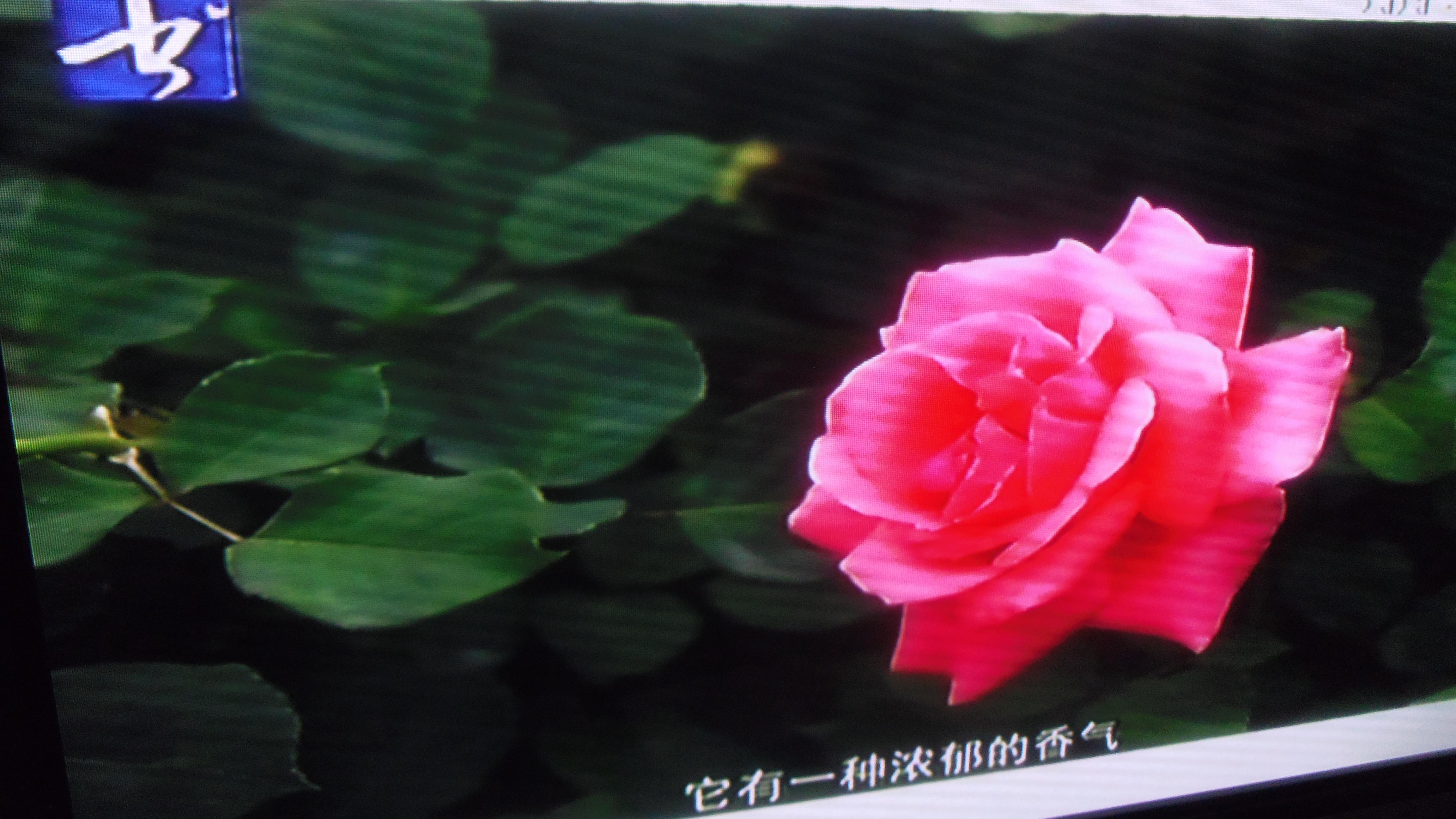 IMGP3003.JPG