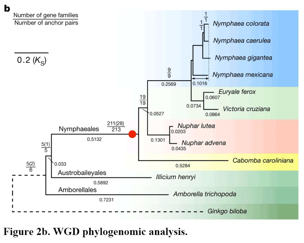 Figure-2b.png