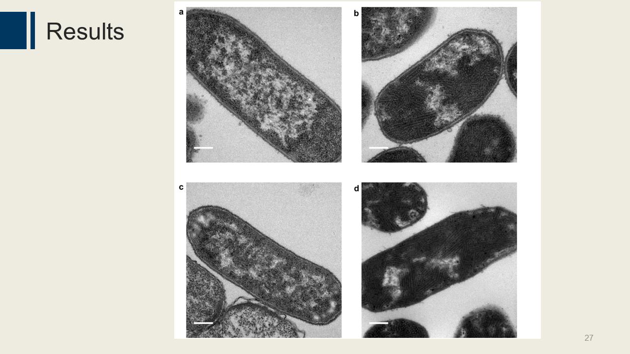 科学网工程合成支架用于组织细菌细胞质内的蛋