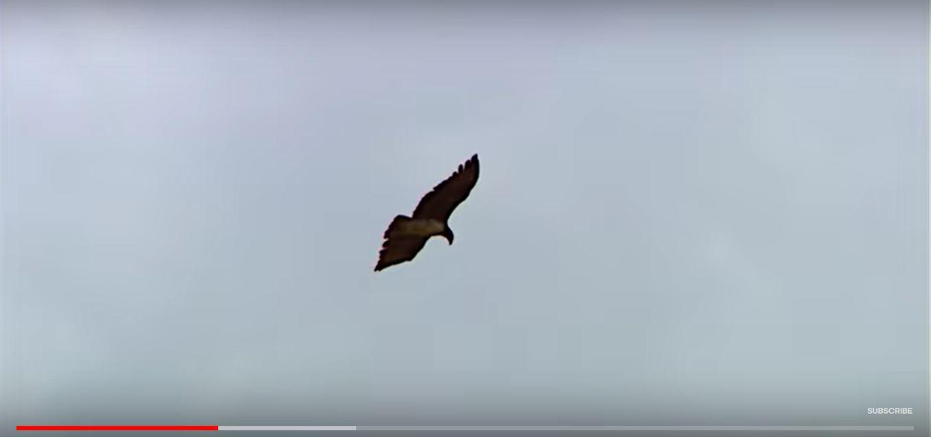 鸟说假话-3.JPG