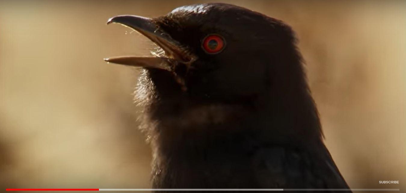 鸟说假话-4.JPG
