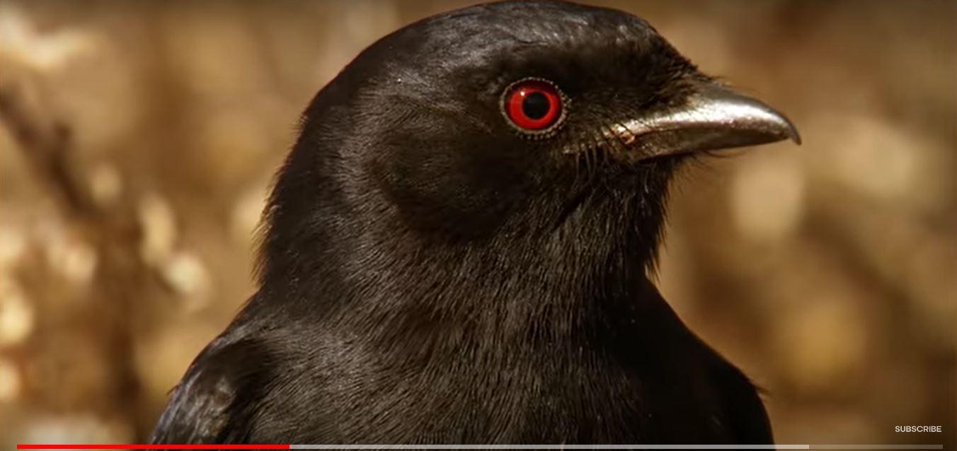 鸟说假话-6.JPG
