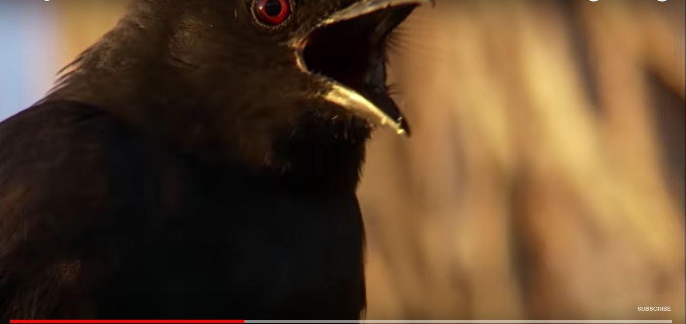 鸟说假话-10.JPG