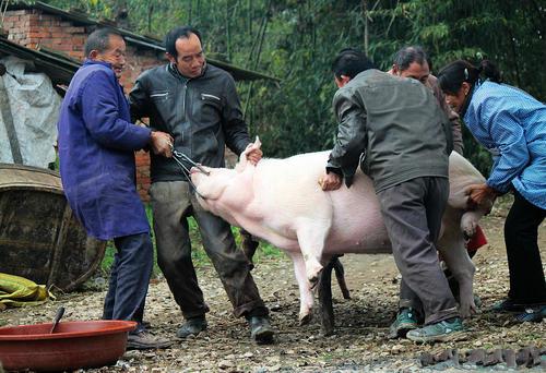 杀猪.jpg