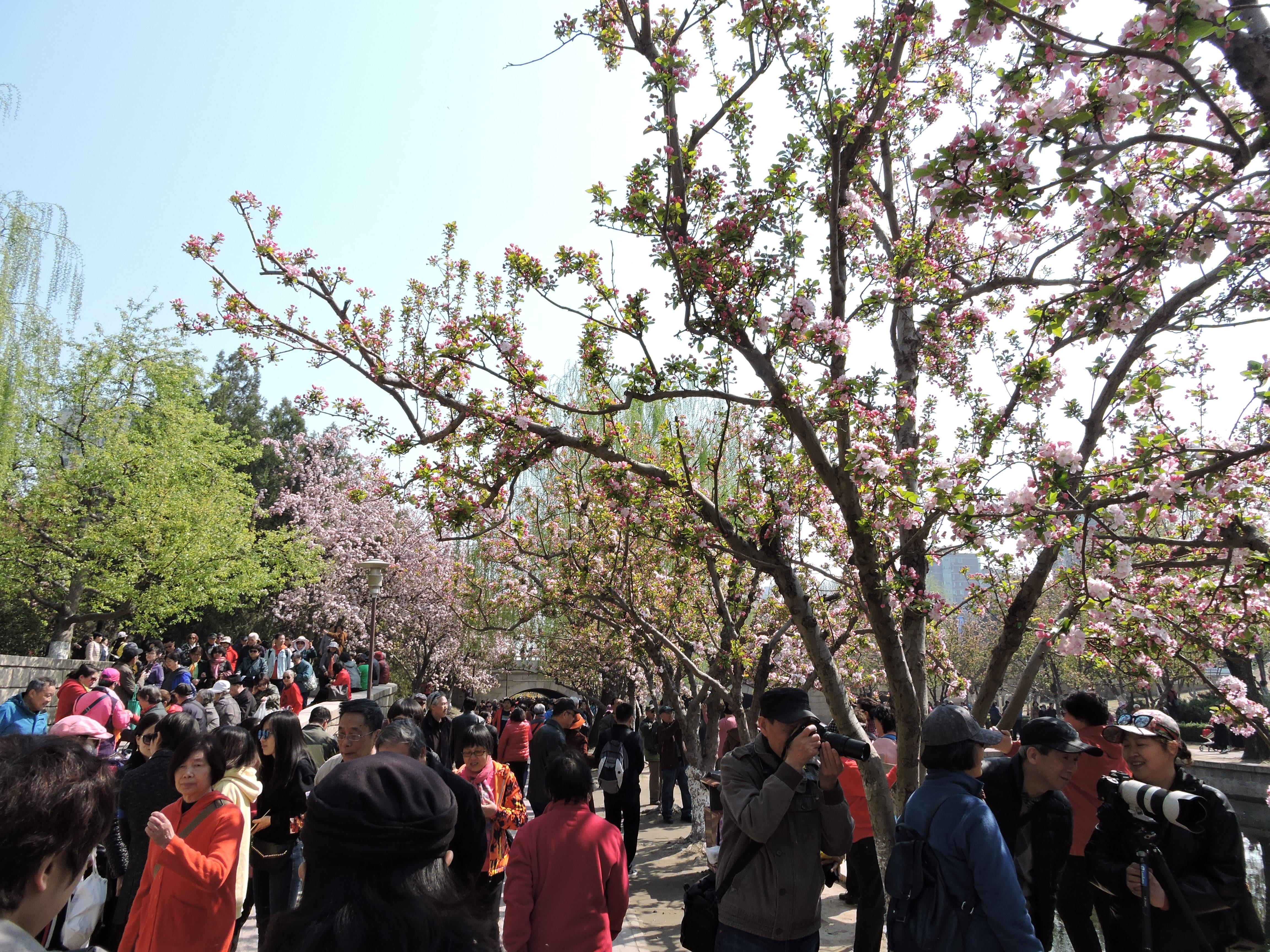 2019-04-03 DSCN9205.JPG
