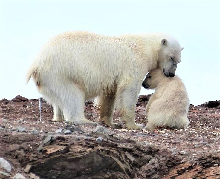 003熊妈妈小便时还把宝宝保护在靠近自己的身边 - 副本 - 副本.jpg
