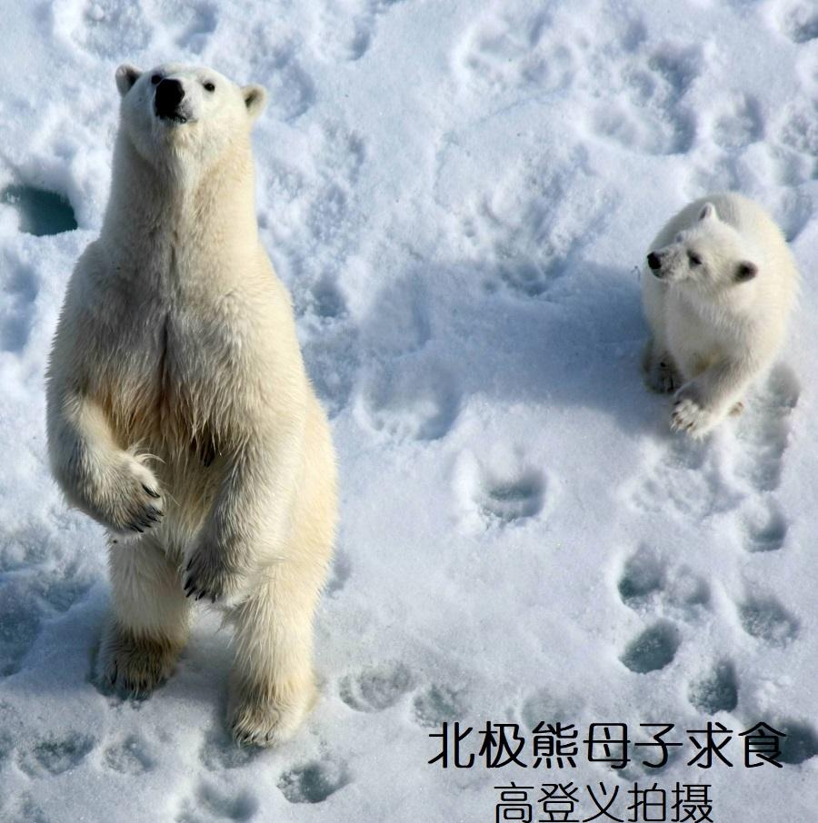 004熊妈妈也站立表演求食 - 副本.jpg