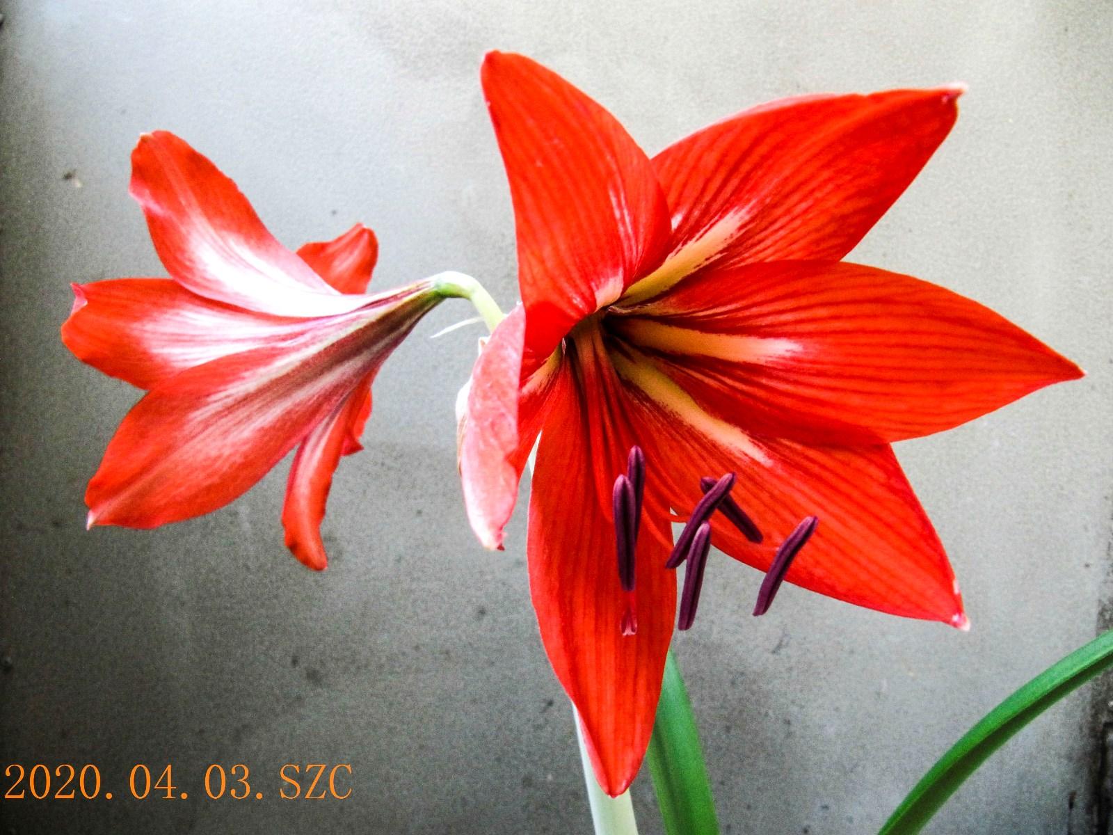 5IMG_3835(2020)_1-1_1.jpg