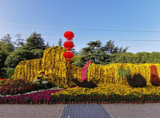 上大2019年菊花文化节13.jpg